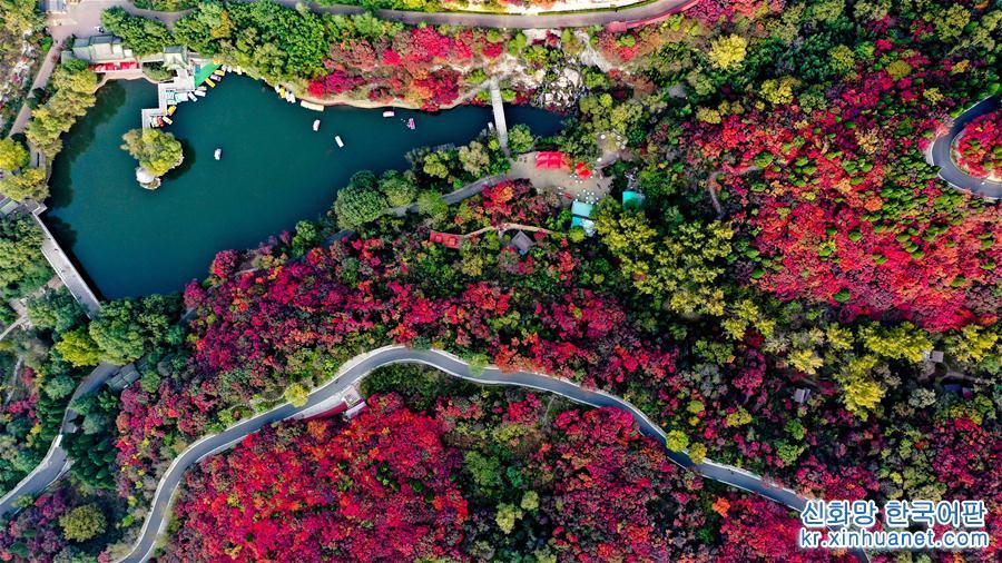 무르익는 가을, 산둥성 지난시 남부 산간 지역의 훙예곡 관광지가 울긋불긋 단풍으로 물들어 고운 가을빛 색채의 향연을 펼치고 있다. [촬영/신화사 기자 궈쉬레이(郭緒雷)]