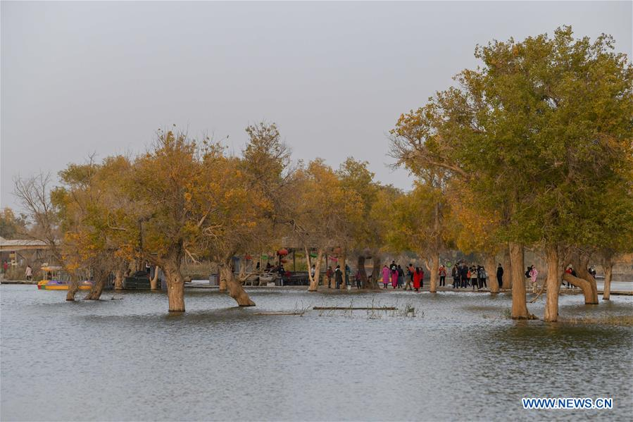 Tourists enjoy the scenery of populus euphratica, commonly known as desert poplar, at Lop Nur People Village in Yuli County, northwest China's Xinjiang Uygur Autonomous Region, Oct. 26, 2019. In the first three quarters of this year, Xinjiang received over 183.85 million tourists from home and abroad with a year-on-year increase of 40.9 percent, and saw a total tourism revenue of more than 304.6 billion yuan (about 43.1 billion U.S. dollars) with a year-on-year growth of 40.78 percent. (Xinhua/Zhao Ge)<br/>