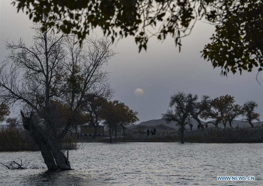 Tourists enjoy the sunset scenery of populus euphratica, commonly known as desert poplar, at Lop Nur People Village in Yuli County, northwest China's Xinjiang Uygur Autonomous Region, Oct. 26, 2019. In the first three quarters of this year, Xinjiang received over 183.85 million tourists from home and abroad with a year-on-year increase of 40.9 percent, and saw a total tourism revenue of more than 304.6 billion yuan (about 43.1 billion U.S. dollars) with a year-on-year growth of 40.78 percent. (Xinhua/Zhao Ge)<br/>