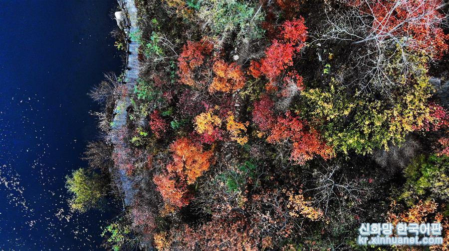 깊어가는 가을, 지난 난부산구는 붉은색, 노란색, 초록색 등 다양한 색채의 향연이 펼쳐져 한 폭의 아름다운 취안청(泉城)의 추색도를 그려놓았다. [촬영/신화사 기자 왕카이(王凱)]