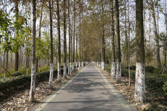 【美丽中国·网络媒体生态文明行】层林尽染入画来,60秒看荒滩上建成的国家级森林公园