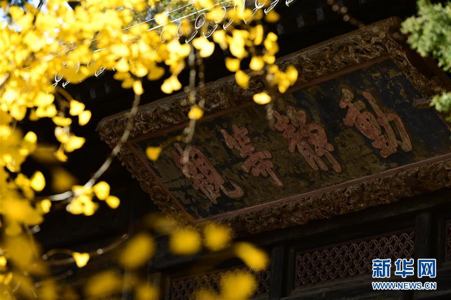 <br/>  11月11日,大觉寺内的古银杏黄叶与大殿牌匾相映成趣。 新华社记者 尹栋逊 摄