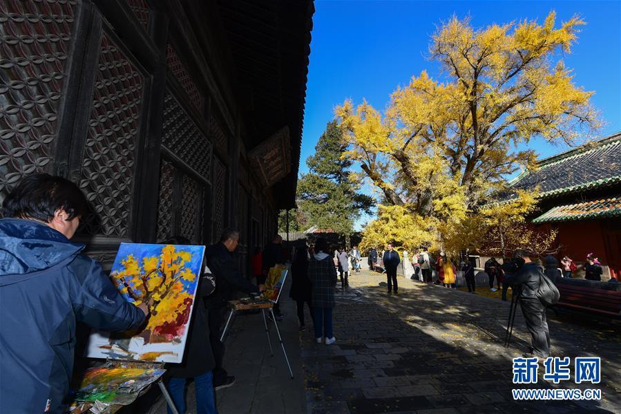 <br/>  11月11日,绘画爱好者在大觉寺内的古银杏树旁写生。新华社记者 尹栋逊 摄