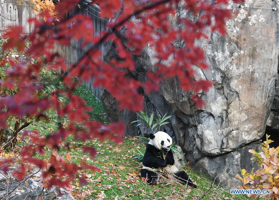 U.S.-WASHINGTON D.C.-CHINA-GIANT PANDA BEI BEI-DEPARTURE