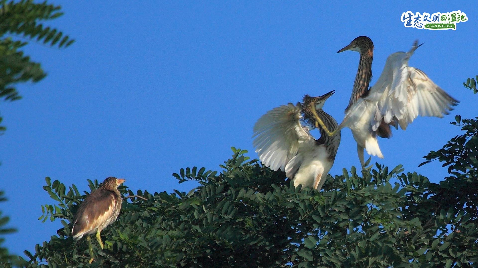2017年8月9日,天津研究制定了《天津市湿地自然保护区规划》《七里海湿地生态保护修复规划》《天津市北大港湿地自然保护区总体规划》《天津市团泊鸟类自然保护区规划》和《天津市大黄堡湿地自然保护区规划》。这,既是人类留给子孙后代的生态财富,也是给候鸟留下的自然空间。<br/>