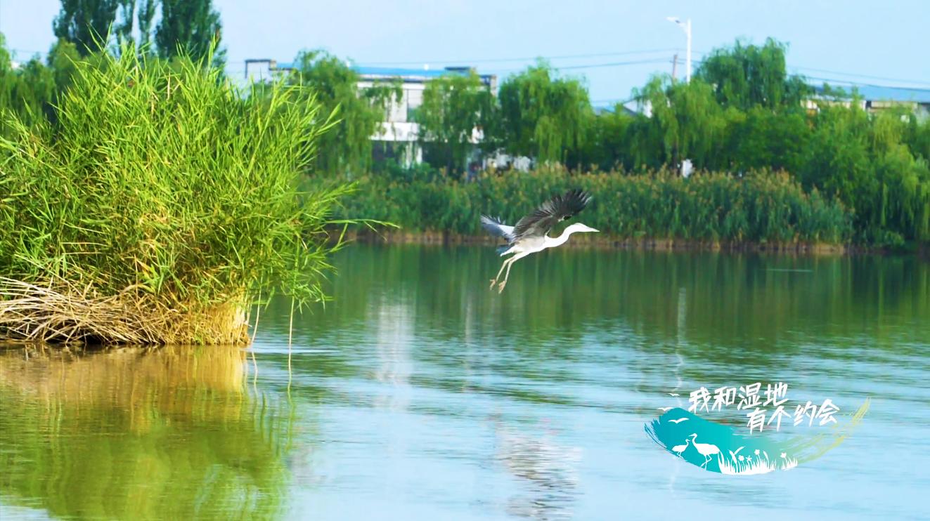"""【生态文明@湿地】一眼千年,带你去""""阅""""海"""