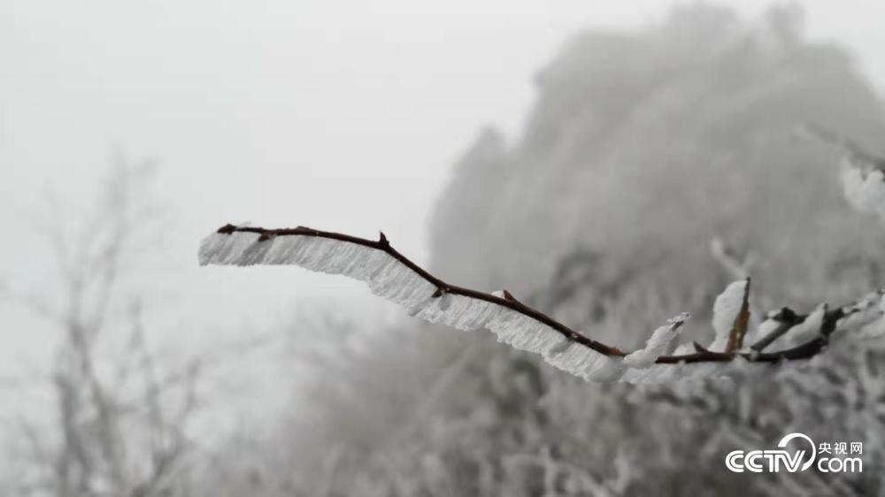 图为武当山银装素裹。近日,中东部一轮大范围雨雪天气陆续上线,地处中国版图中心方位的武当山也迎来了冬雪。云雾缭绕,雨雪梳妆,宛若仙境。这里的古建筑群依山就势,追求着与自然的和谐统一。(刘亮 摄)<br/>