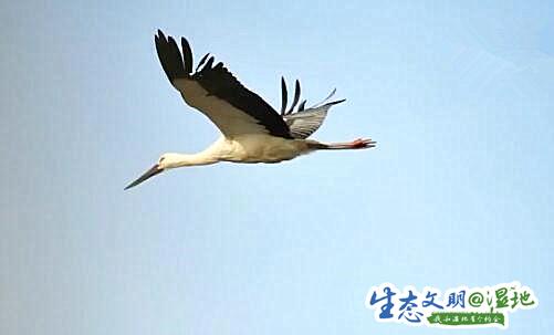 【生态文明@湿地】陕西多地候鸟起舞 冬日美景生机盎然