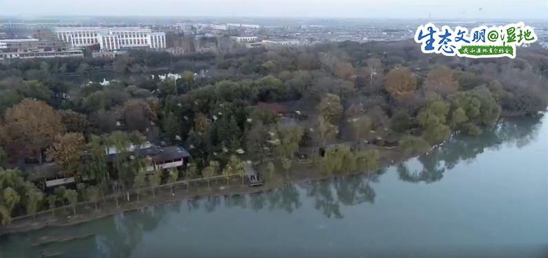 【生态文明@湿地】昔日采煤塌陷区变身生态湿地 7万候鸟聚集