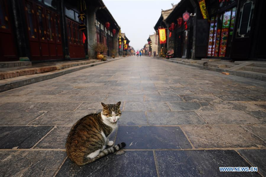 A cat rests on a street in the ancient city of Pingyao in Jinzhong, north China's Shanxi Province, on Dec. 25, 2019. Pingyao, a UNESCO World Cultural Heritage site in north China's Shanxi Province, is famous for its well-preserved ancient architecture including the city walls. The city boomed in the 19th century as China's financial center, as Shanxi merchants expanded their businesses across the country. Now, the well-preserved compounds of these affluent merchants and some emerging modern elements like souvenir shops, bars, photography festival and theatrical performances have again brought the ancient city to life and made it a popular tourist attraction. (Xinhua/Zhan Yan)<br/>