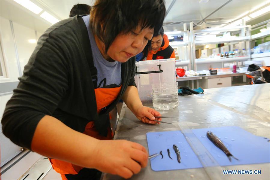 Zhang Jie, a member of China's 36th Antarctic expedition team, deals with fish samples aboard China's polar icebreaker Xuelong 2, or Snow Dragon 2, Jan. 1, 2020. (Xinhua/Liu Shiping)<br/>