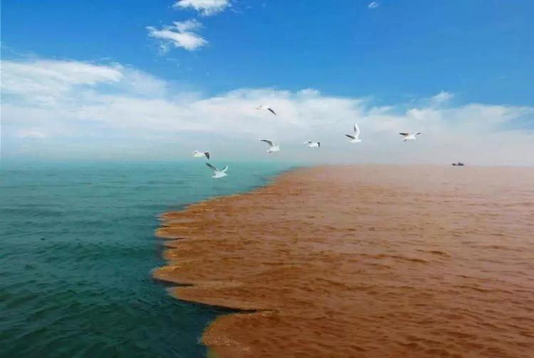 山東新一家5A級景區 黃河口生態旅游區通過公示
