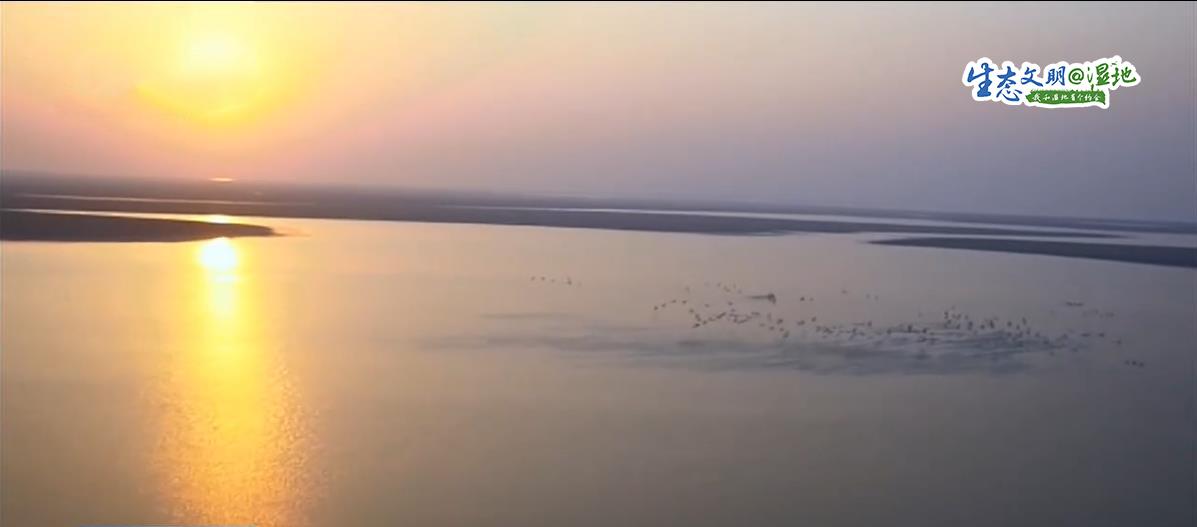 【生态文明@湿地】翩翩起舞候鸟觅食 冬日里一道亮丽的风景
