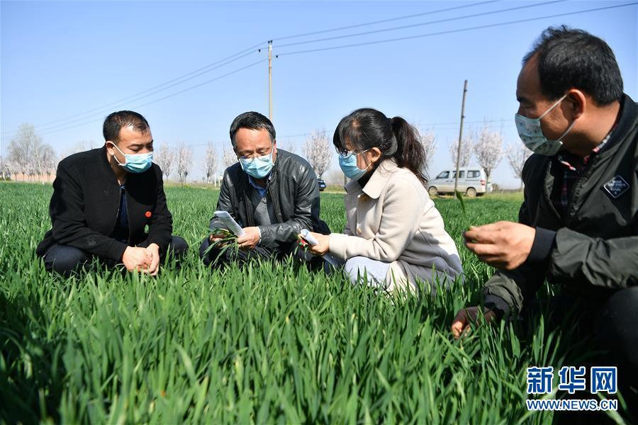 3月17日,西安市农技中心农业科技特派员(左二)在西安市周至县广济镇与基层农技员交流小麦生长情况。新华社记者 张博文 摄<br/>