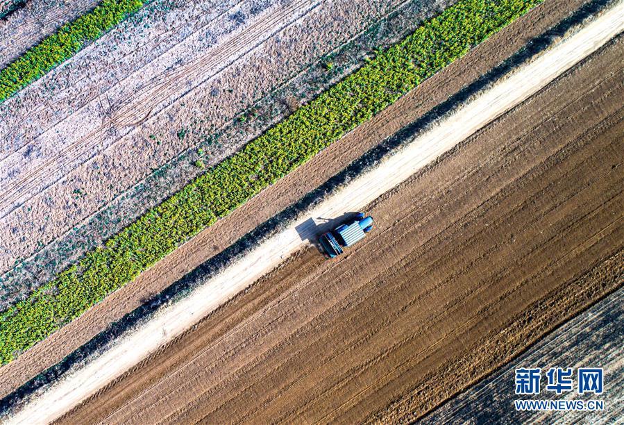 3月20日,河北省武安市大同镇马会村,农民驾驶农机犁地(无人机照片)。新华社记者 王晓 摄<br/>