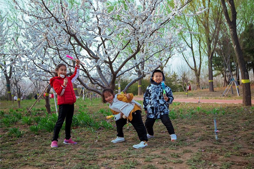 阳春三月 带你感受东营的花香