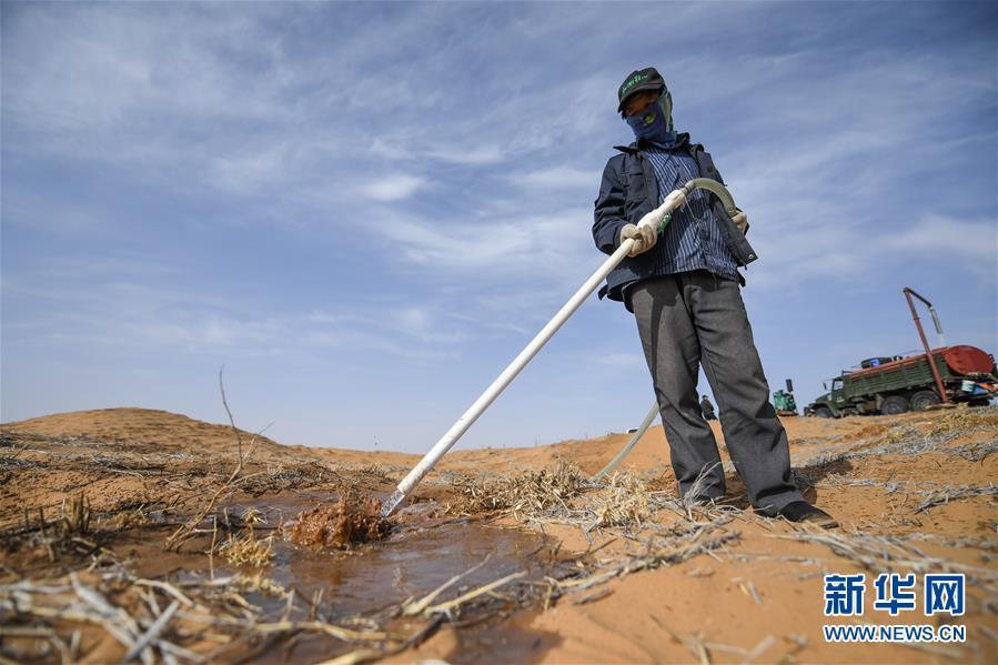 4月2日,在阿拉善左旗的腾格里沙漠中,工人在给花棒浇水。 近日,在内蒙古自治区阿拉善左旗腾格里沙漠,工人们开始治沙、种植沙生植物。腾格里沙漠是我国第四大沙漠,此次治沙是中国绿化基金会百万森林计划&mdash;&mdash;腾格里沙漠锁边生态公益项目,目的是通过种植生态锁边林阻止沙漠扩展蔓延。 新华社记者 刘磊 摄<br/>
