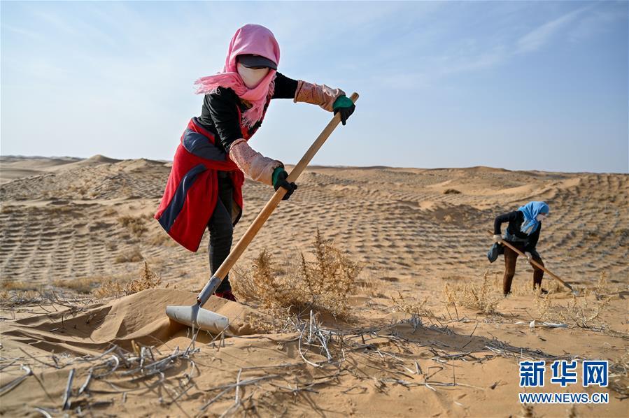 4月2日,工人在阿拉善左旗腾格里沙漠种植花棒。 近日,在内蒙古自治区阿拉善左旗腾格里沙漠,工人们开始治沙、种植沙生植物。腾格里沙漠是我国第四大沙漠,此次治沙是中国绿化基金会百万森林计划&mdash;&mdash;腾格里沙漠锁边生态公益项目,目的是通过种植生态锁边林阻止沙漠扩展蔓延。 新华社记者 连振 摄<br/>