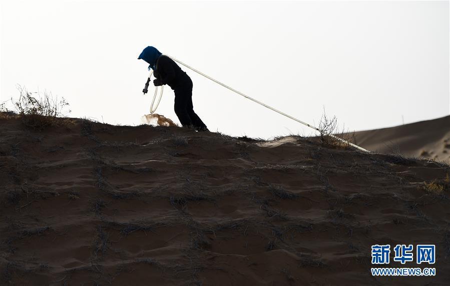 4月2日,在阿拉善左旗腾格里沙漠,工人给刚种下的花棒浇水。 近日,在内蒙古自治区阿拉善左旗腾格里沙漠,工人们开始治沙、种植沙生植物。腾格里沙漠是我国第四大沙漠,此次治沙是中国绿化基金会百万森林计划&mdash;&mdash;腾格里沙漠锁边生态公益项目,目的是通过种植生态锁边林阻止沙漠扩展蔓延。 新华社记者 连振 摄<br/>