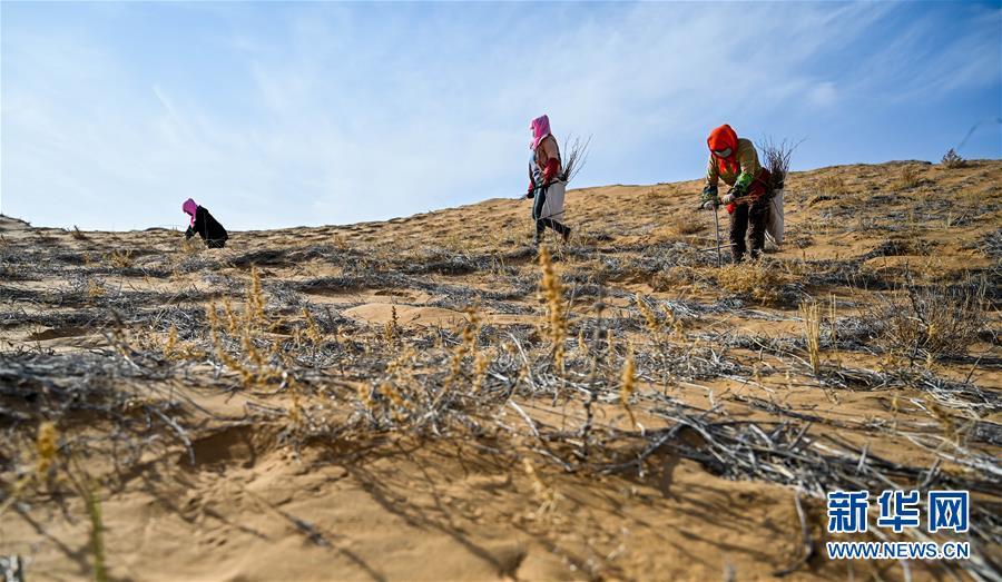 4月2日,工人在阿拉善左旗腾格里沙漠种植花棒。 近日,在内蒙古自治区阿拉善左旗腾格里沙漠,工人们开始治沙、种植沙生植物。腾格里沙漠是我国第四大沙漠,此次治沙是中国绿化基金会百万森林计划——腾格里沙漠锁边生态公益项目,目的是通过种植生态锁边林阻止沙漠扩展蔓延。 新华社记者 连振 摄