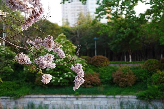 美在菏泽——看一个城市的色彩与底蕴