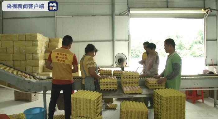 《【天游手机客户端登录】抱团发展新模式 17个村联合养殖蛋鸡脱贫致富》