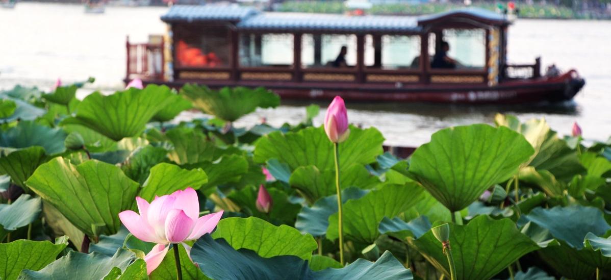 """""""荷月""""的济南:柳荷交映的明湖夏景"""