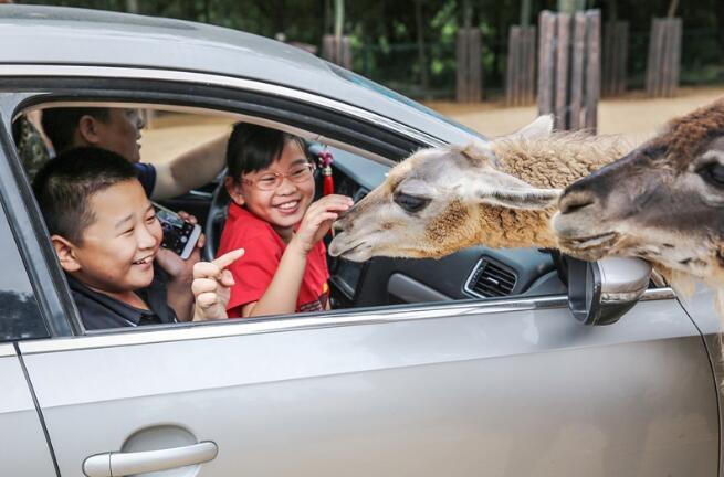 """端午假期来动物世界""""粽""""享欢乐"""